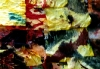 carole-miroche368